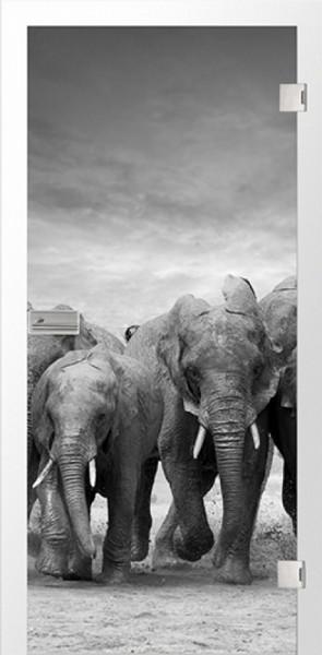 Ganzglastür Color Elefant